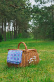 Picnic basket and blue white checkered napkin on park lawn. Picnic basket and blue white checkered napkin on lawn with daisy flowers. Vertical view. Weekend Stock Photography