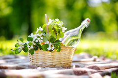 Picnic basket close up. Picnic basket with fruits, flowers and water in the glass bottle Royalty Free Stock Photography