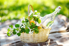 Picnic basket close up. Picnic basket with fruits, flowers and water in the glass bottle Stock Photos