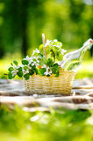 Picnic basket close up. Picnic basket with fruits, flowers and water in the glass bottle Royalty Free Stock Image