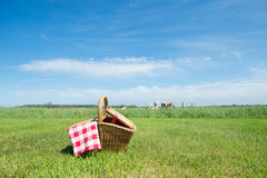 Picnic basket in the country. Picnic basket in grass outdoor in front of livestock cows Royalty Free Stock Image
