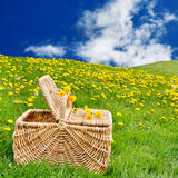 Picnic basket dandelion meadow Stock Image
