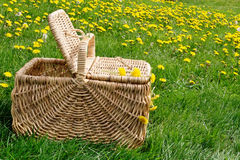 Picnic basket dandelion meadow Royalty Free Stock Images