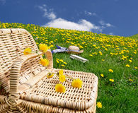 Picnic basket dandelion meadow Stock Photo