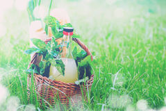 Picnic Basket Drink Bread Leave Green Effect Bokeh Stock Images