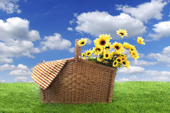 Picnic basket in the field Stock Image
