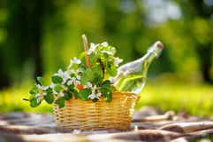 Picnic basket with flowers. Picnic basket with fruits, flowers and water in the glass bottle Royalty Free Stock Image