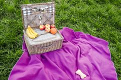 Picnic basket with food on the blanket royalty free stock photos