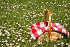 Picnic basket. On green grass Stock Photo