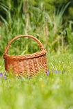 Picnic basket on meadow in green grass Royalty Free Stock Image