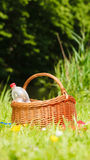 Picnic basket on meadow in green grass Stock Photo