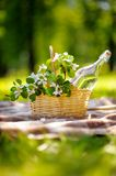 Picnic basket outdoors Stock Images