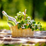 Picnic basket outdoors Stock Image