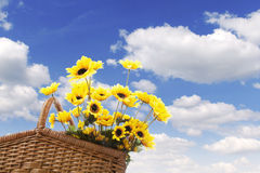 Picnic basket with sunflower Royalty Free Stock Images