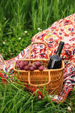 Picnic basket with wine bottle and grapes on green grass lawn. Selctive focus Royalty Free Stock Image
