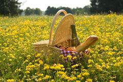 Picnic basket with wine, bread and fruits. Outdoors in yellow flowers Stock Photography