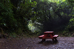 Picnic bench in the cloud forest Stock Image