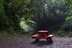 Picnic bench in the cloud forest Stock Photo