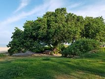 Free Picnic Bench In Shaded Tree Area Royalty Free Stock Photo - 112789055
