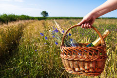 Picnic blanket. In landscape in summer time Royalty Free Stock Photography