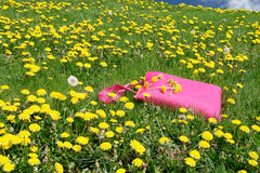Picnic blanket in meadow. Folded picnic blanket in a field of dandelions Royalty Free Stock Photography