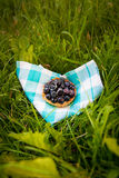 Picnic. cake with blueberry Stock Image