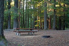 Picnic Camping Space In The Forest. An empty picnic and camping space among the tall trees in the forest royalty free stock image
