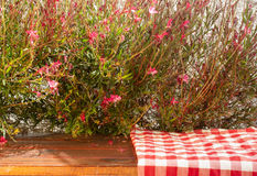 Picnic cloth on the table with red flowers. And natural background Royalty Free Stock Image