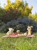 Picnic degli orsi Immagini Stock