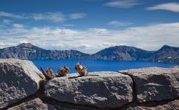 Picnic del Chipmunk nel lago fotografie stock