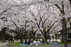 Picnic di Hamani - Sakura Fotografie Stock