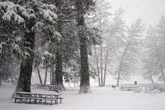 Picnic di inverno Fotografie Stock Libere da Diritti