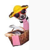 Picnic dog Royalty Free Stock Photos
