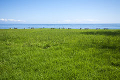 Picnic grounds in grassy field at the ocean Royalty Free Stock Images
