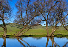 Picnic on the Lake, California. Picnic table on a lake in the winter, with trees reflected in the water, amid the rolling green hills of Marin County, in Stock Photos