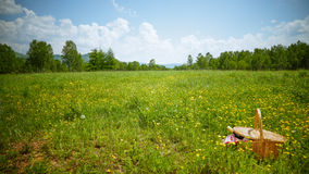Picnic. On Meadow at Sunny Day royalty free stock image