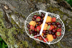 Picnic with mixed berries and fruits Stock Images