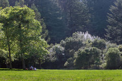 Picnic in the park royalty free stock images