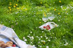 Picnic in the park. A green meadow with flowers, a plaid and a bottle of wine. Romantic dinner in nature. Free space for text. Spring in Holland Royalty Free Stock Photo