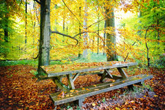 Picnic place in autumn forest Stock Photography