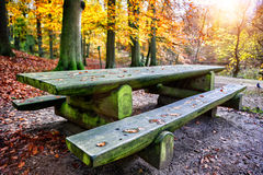 Picnic place in autumn forest Royalty Free Stock Photo