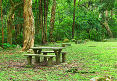 Picnic place in forest Royalty Free Stock Photo