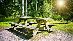 Picnic place in summer forest. Slider shot stock footage