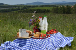 Picnic Placed on Meadow Royalty Free Stock Image