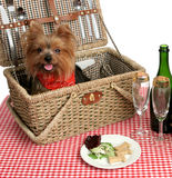 Picnic Puppies Stock Photos