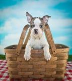 Picnic Puppy Stock Image