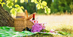 Picnic. With red and white wine near oak Royalty Free Stock Images
