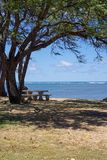 Picnic seat under tree overlooking ocean. A seat and picnic area in the shade of a tree overlooking the beach and ocean allowing peaceful reflection Stock Photography