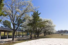 Picnic shelters and Dogwood trees at Mount Trashmore stock photography