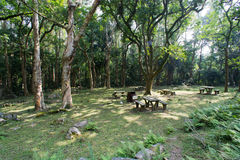 A picnic site in forest Royalty Free Stock Photo